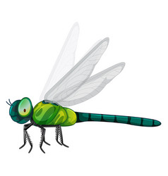 green dragonfly on white background vector image