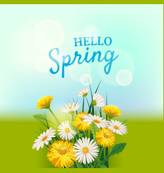 hello spring a bouquet of daisies flowers vector image