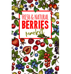 natural fresh berries sketch poster vector image