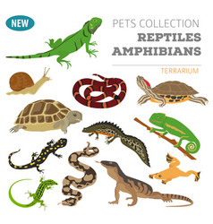 Pet reptiles and amphibians icon set flat style vector