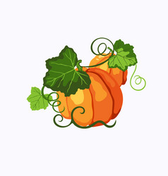 Two pumpkins with green leaves vector