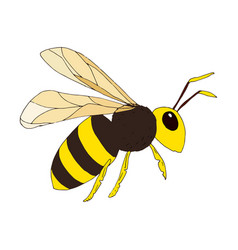Wasp on white background vector