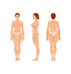 Woman anatomy vector
