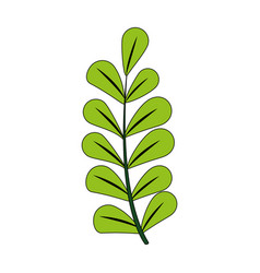 color image spring branch with ovals leaves vector image vector image