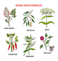 best herbal remedies for fibromyalgia vector image