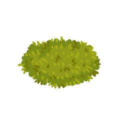 Bush in form an oval vector