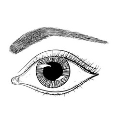 Eye with brow hand drawn sketch vector
