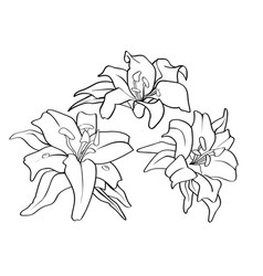 Flower piece tattoo pattern lined draw vector