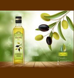 olives with leaves on a branch vector image