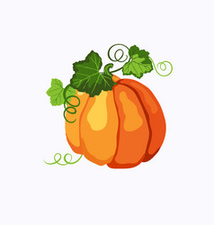 orange pumpkin with leaves and stems isolated vector image