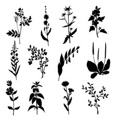 silhouettes of wild plants vector image