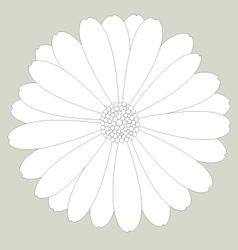 Flower white on background vector image