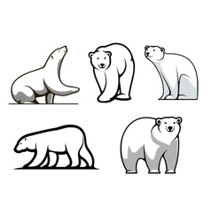 White polar bears set vector image vector image