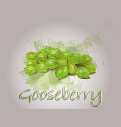 Gooseberry watercolor food vector