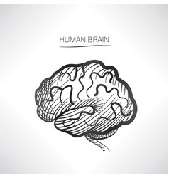 Human brain sign isolated internal organ anatomy vector