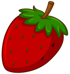 One red strawberry on white background vector