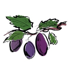 Plum on the branch vector image