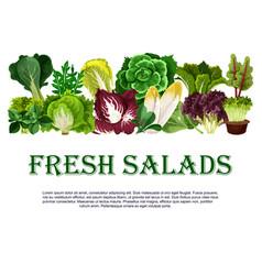 Poster fresh salads leafy vegetables vector