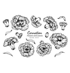 Collection set carnation flower and leaves vector