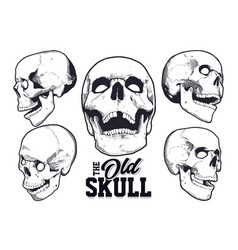 engraving style skulls set vector image