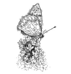 hand drawing of butterfly feeding on buddleja bush vector image