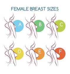 set silhouettes icons various female breast vector image