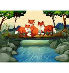 Three foxes on log over river vector