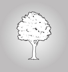 big tree silhouettes vector image