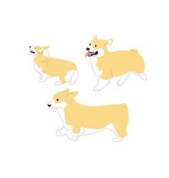 Set corgi dogs vector