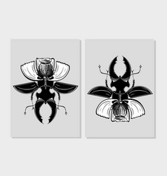 stag beetle insect with poppy flower flora and vector image