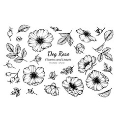 collection set of dog rose flower and leaves vector image