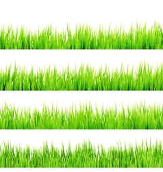 Fresh spring green grass Isolated On White EPS 10 vector image