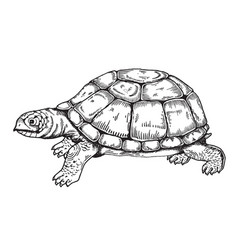 Turtle engraving style vector