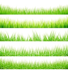 Green Grass Big Set vector image
