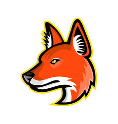 Dhole or asiatic wild dog mascot vector