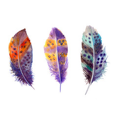 hand drawn watercolour bird feathers vibrant boho vector image