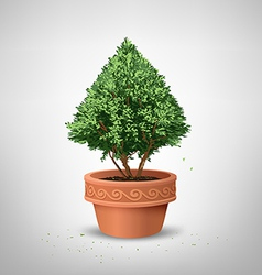 Pots pine tree vector