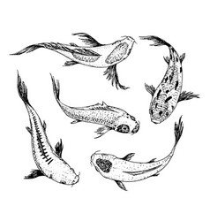 Set koi carps japanese fish korean animals vector