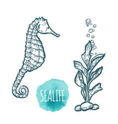 sea horse drawing on white background hand drawn vector image vector image