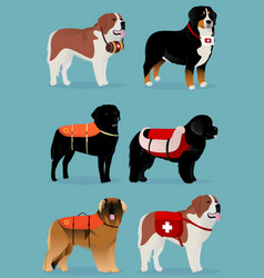 set of dogs rescuers vector image vector image