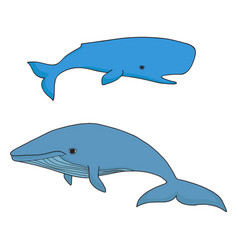cartoon sea whale and cachalot vector image