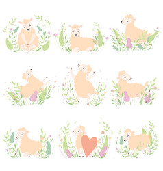 cute little lambs set adorable sheeps animals on vector image