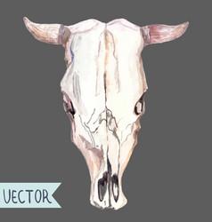 watercolor bull skull over white vector image