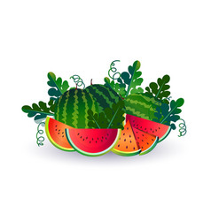 watermelon fruit on white background healthy vector image