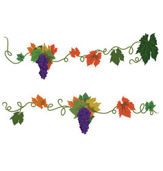 set of dividers with grapes vector image vector image