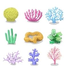 Colorful corals Reef nature marine vector