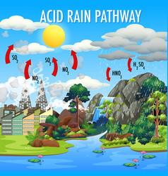 diagram showing acid rain pathway vector image