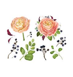 floral elements set pink peach ranunculus leaves vector image