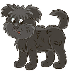 Funny and shaggy dog affenpincher vector