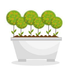 Garden cute flowers icon vector
